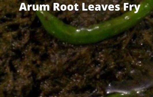 Arum Root Leaves