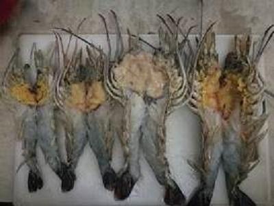 Restaurant style lobster